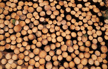 sawed: Many cuts of sawed logs form woodstack background.  Stock Photo
