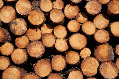 sawn: Sawn cuts of pine logs form woodstack background.