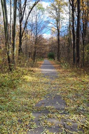 dead leaves: La ruta de acceso est� cubierto con hojas muertas. Callej�n recta huir en Parque de oto�o.