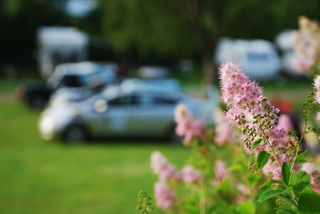 Motoring tourists have set up a camp on the green camping site. Cars and persons are blurred. In the background there are wild flowers.
