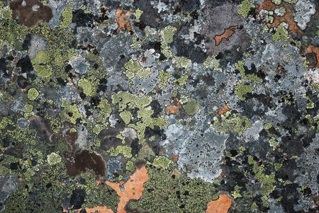 Grey stony surface is overgrown with motley moss. Restrained colours of arctic Norwegian nature. Stok Fotoğraf