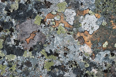 restrained: Grey stony surface is overgrown with motley moss. Restrained colours of arctic Norwegian nature. Stock Photo