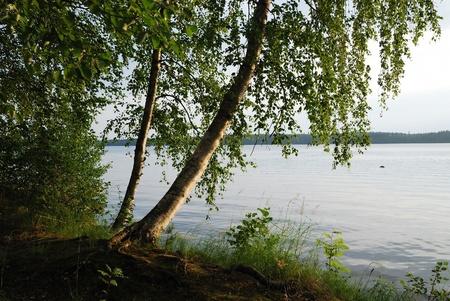 finland�s: El abedul es plegado por encima del lago de los bosques calma. Vacaciones de verano en Finlandia.