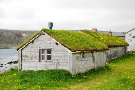 Norwegian fishing village is photographed in summer. There are two small houses or huts with greenroofs. Yellow dandelions are flowering in the green grass everywhere.
