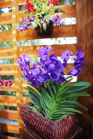 Blue orchids are flowering in wicker flowerpot. They are decorating the wooden wall of pavilion.  photo