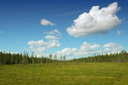 swampy: Wide swampy area is stretching to taiga forest.Typical landscape of Finland is photographed in summer.