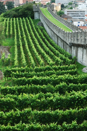 rampart: Well-groomed vineyards are situated on the green hill under the medieval rampart in Bellinzona.