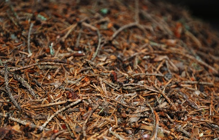 Surface of the ant hill photo