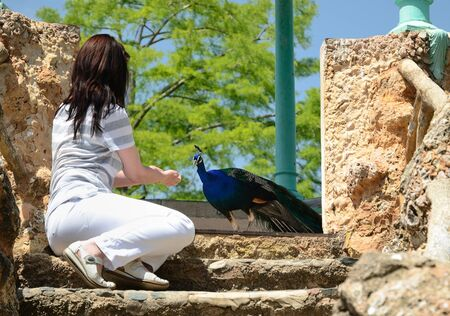 A woman is feeding a peacock in the stone summerhouse of the beautiful parkland 'Casa Sama'. photo