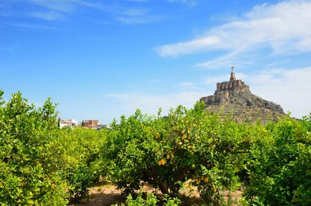 The lemon orchard is photographed against the famous hill with ancient castle of Monteagudo  Murcia is a major producer lemons and oranges in European supermarkets