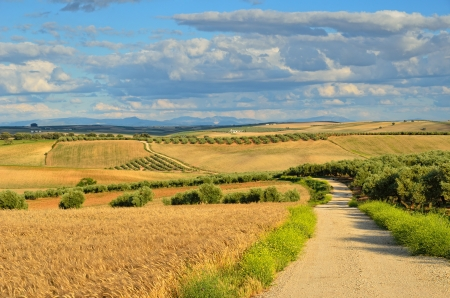 agricultural area: Andalusia is traditionally an agricultural area  The primary cultivation is dryland farming of cereals  The most important tree crops are olives