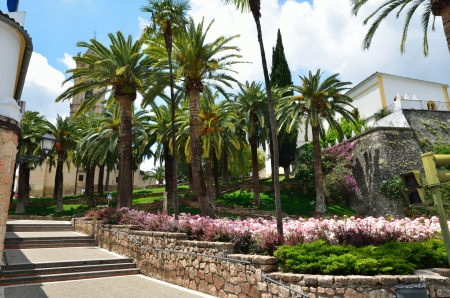 luxuriant: A luxuriant public garden is in the Spanish town Cabra  There are high palm trees and a lot of flowering roses