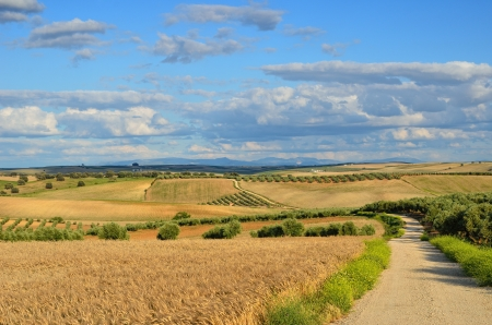 agricultural area: Andalusia is traditionally an agricultural area. The primary cultivation is dryland farming of cereals. The most important tree crops are olives.