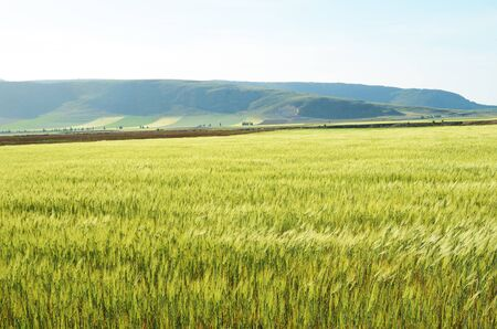 agricultural area: Andalusia is traditionally an agricultural area. The primary cultivation is farming of cereals there.