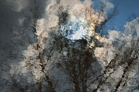 wavelet: Wavy surface of water is reflecting the spring sky and bare trees