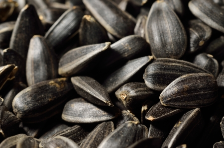 Sunflower oilseeds are photographed close-up  photo