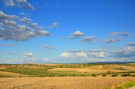 agricultural area: Andalusia is traditionally an agricultural area  There are cereals fields, olive and almond orchards in the Spanish boundless plain  Stock Photo