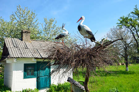 There are small shed or a storehouse and a crane nest in the country yard