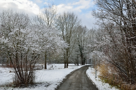 meandering: The winter park is lightly covered with wet snow  The meandering road is cleared  Stock Photo