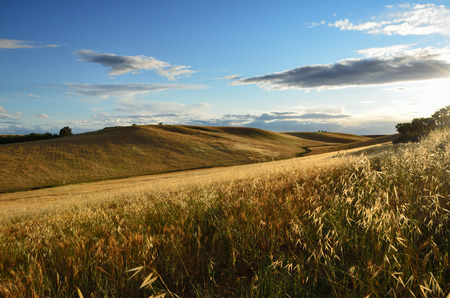 agricultural area: Andalusia is traditionally an agricultural area of Spain  The primary cultivation is arid farming of cereals  Stock Photo