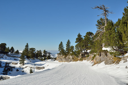 forested: The piste is on the forested slope in the winter Pyrenees.