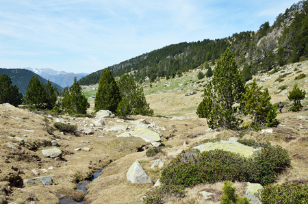 moorland: In the upper part of the Vall-de-Madriu-Perafita-Claror there are the high-altitude valleys with the many streams and flooding moorland. Stock Photo