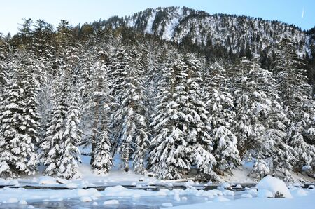 gave: Marcadau valley is a favorite place for winter vacations. There are the frost-hardy stream Gave Marcadau, snowy slopes with coniferous forest and many routes for skiing and walking. Stock Photo