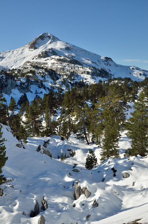 soft peak: The slope of the mountain Arlas are covered with slight snow and evergreen pine trees in the vicinity of the ski resort Pierre Saint Martin. Stock Photo