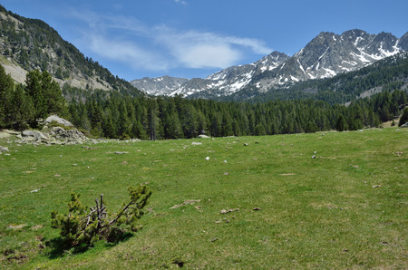 tourism in andorra: In the upper part of the Vall-de-Madriu-Perafita-Claror there are the high-altitude valleys with the alpine meadows and evergreen forest.