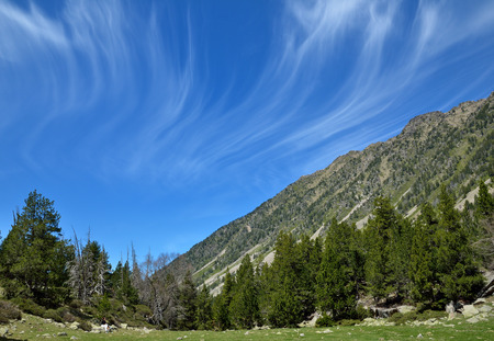 tourism in andorra: In the upper part of the Vall-de-Madriu-Perafita-Claror there are the high-altitude valleys with the alpine meadows and an evergreen forest.