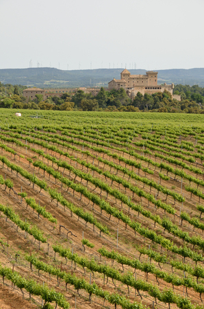 edifices: Spanish country landscape with a plantation of grapevines and the remote ancient edifices Stock Photo