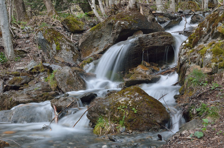 rapidly: The mountain stream is rapidly flowing on the stones and tree stems in the spring mountain slope forested. The waterfall is photographed at long shutter speed from below.