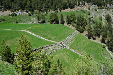furrow: Green grassland with a stone furrow and a multilevel barrier on the strengthened mountain slope in the Andorran mountains.