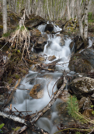 rivulet: A mountain stream is running on mossy rocks. The waterfall is photographed at long shutter speed from below. The focus is on the wet stones.