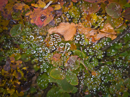 Large and small water spots are on the cobweb above the green, red, yellow leaves and twigs blurred.