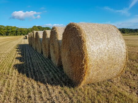 Packaged straw is placed one after another on the stubble of the field.