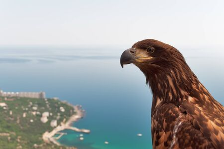 Hand-eagle on the lookout in the mountains of Crimea, Ukraine