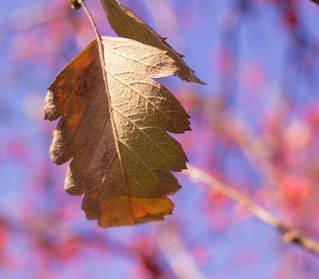 glare: the beauty of Ukrainian nature in November, leaves on the trees, the sun glare