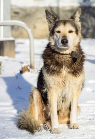 man's: beautiful dog with a collar in the winter on the street, one is a social problem of homelessness