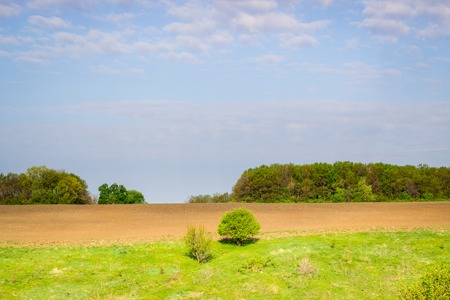 Wide field with sprouts under the blue sky around everything bright and green
