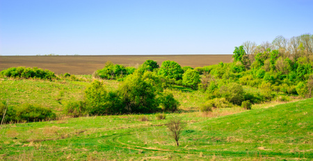 Boundless open spaces of nature under a clear blue sky, bright green vegetation cover and no one around
