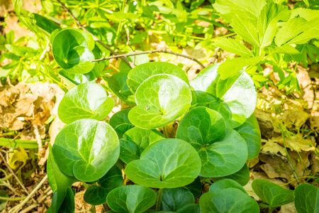 Brightly lit by the sun, green plants in the forest Stock Photo
