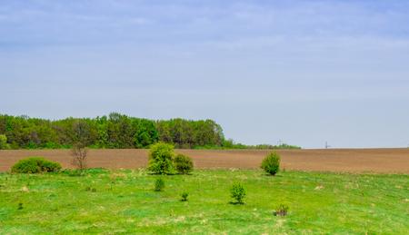 Ukrainian view beauty of nature, delightful place, meadow, field, forest, under blue sky Фото со стока