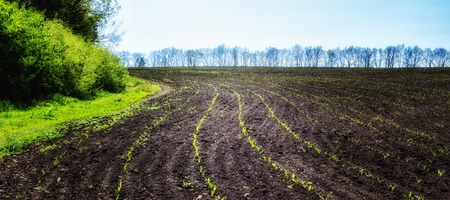 Brightly lit sprouts on the field of beauty of Ukrainian nature