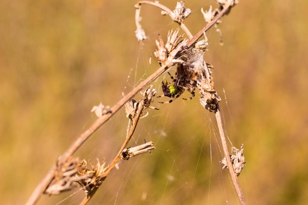 spider on field plants on a bright autumn day around it a cobweb trap for its victims Stock Photo
