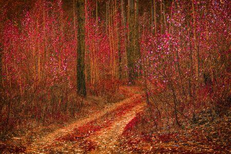 幻想的な自然歩道に沿って若い森林につながる birches 美しく、鮮やかな落ち葉カバー地面 写真素材