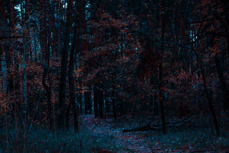 fantastic night autumn forest with bright orange leaves through it leads the trail very beautifully