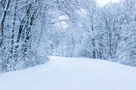 Winter trail along the trees covered with snow is pure and nobody around is light and beautiful