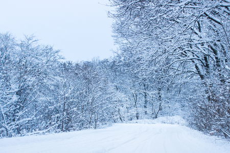 snowy path leads into a forest with tall trees very beautiful 版權商用圖片