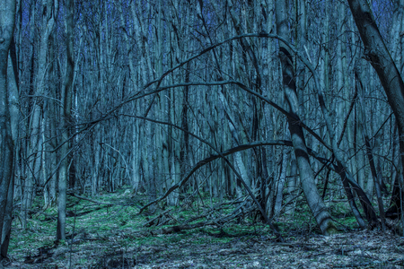 bright and fantastic night forest with densely growing trees and snowdrops is breathtaking and beautiful